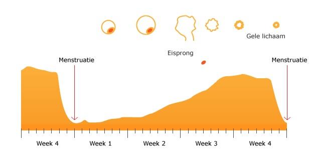 Pms Klachten Tips Voeding Voedingsadviezen En Meer Informatie